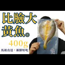 【比臉大 馬祖黃魚】